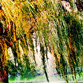 Weeping Willow Tree Painterly Monet Impressionist Dreams by Carol F Austin