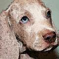 Weimaraner Dog Art - Forgive Me Print by Sharon Cummings