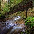 West Humbug Creek by Everet Regal