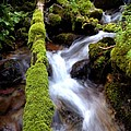 Wet And Green by Steven Milner