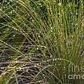 Wet Grass by Juan  Silva