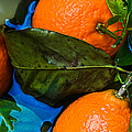 Wet Tangerines Print by Alexander Senin