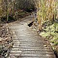 Wetland walk Print by Les Cunliffe