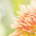 When Summer Dreams Print by Reflective Moment Photography And Digital Art Images