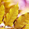 When The Leaves Turn Gold by Artist and Photographer Laura Wrede