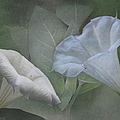 Whispers Of Angel Trumpet Datura by Angie Vogel