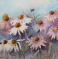 White And Pink Coneflowers by Patsy Sharpe