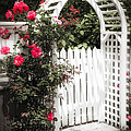 White Arbor With Red Roses by Elena Elisseeva