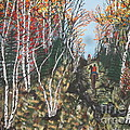 White Birch Trail Ride by Jeffrey Koss