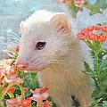 White Ferret by Jane Schnetlage