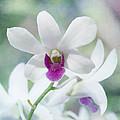 White Orchid by Kim Hojnacki