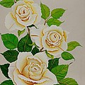 White Roses - Vertical by Carol Sabo