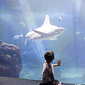 White Shark and Young Boy Print by David Smith