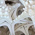 White Starfish Print by Carol Groenen