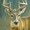 Whitetail Buck by Paul Krapf