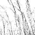 Wild Grasses Abstract by Natalie Kinnear