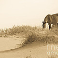 Wild Horse by Diane Diederich