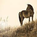 Wild Horse on the Beach Poster by Diane Diederich