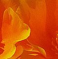 Wild Poppies Print by Ben and Raisa Gertsberg