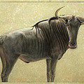 Wildebeest Print by James W Johnson