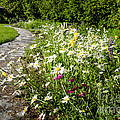 Wildflower garden and path to gazebo Poster by Elena Elisseeva