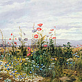 Wildflowers With A View Of Dublin Dunleary by A Nicholl