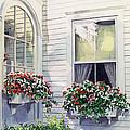 Window Boxes by David Lloyd Glover