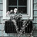 Window Dresser Print by Bonnie Bruno