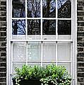 Window In London by Elena Elisseeva
