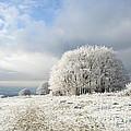 Winter by Anne Gilbert