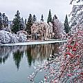 Winter Berries by Nichon Thorstrom