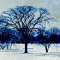 Winter Blues by Shawna Rowe