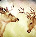 Winter Deer by Bob Orsillo