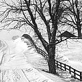 Winter Driveway by Wendell Thompson