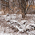 Winter Forest Panorama by Elena Elisseeva