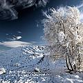 Winter Landscape by Grant Glendinning