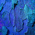 Winter London Plane Tree Abstract 4 by Margaret Saheed