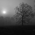 Winter Oak In Fog by Deborah Smith