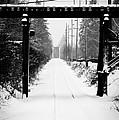 Winter Tracks by Aaron Lee VonBerg