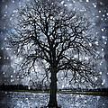 Winter Tree In Snowfall by Elena Elisseeva