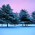 Winter Trees by Brian Jannsen