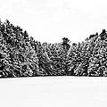 Winter Trees Mink Brook Hanover Nh by Edward Fielding
