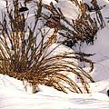 Winter Weeds Print by Kae Cheatham