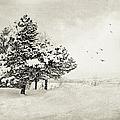 Winter White by Julie Palencia