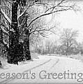 Winter White Season's Greeting Card by Carol Groenen
