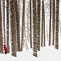 Winter Frolic by Mary Amerman