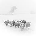 Winter Woollies by Janet Burdon