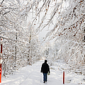 Winterly forest with snow covered trees Print by Matthias Hauser