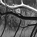 Winter's Touch by Luke Moore