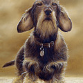 Wire Haired Dachshund by John Silver
